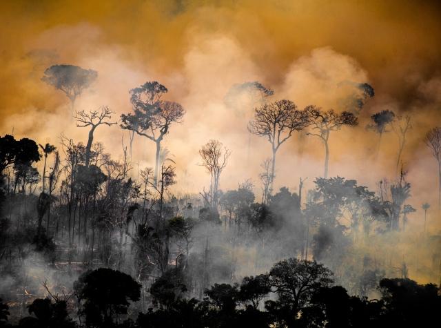 Foto: Greenpeace Brasil på Facebook, 01.09.2020
